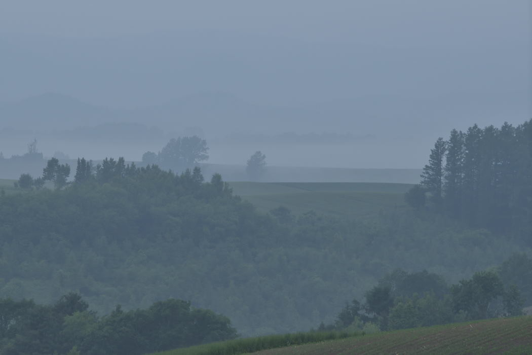 靄が濃くなって来ました