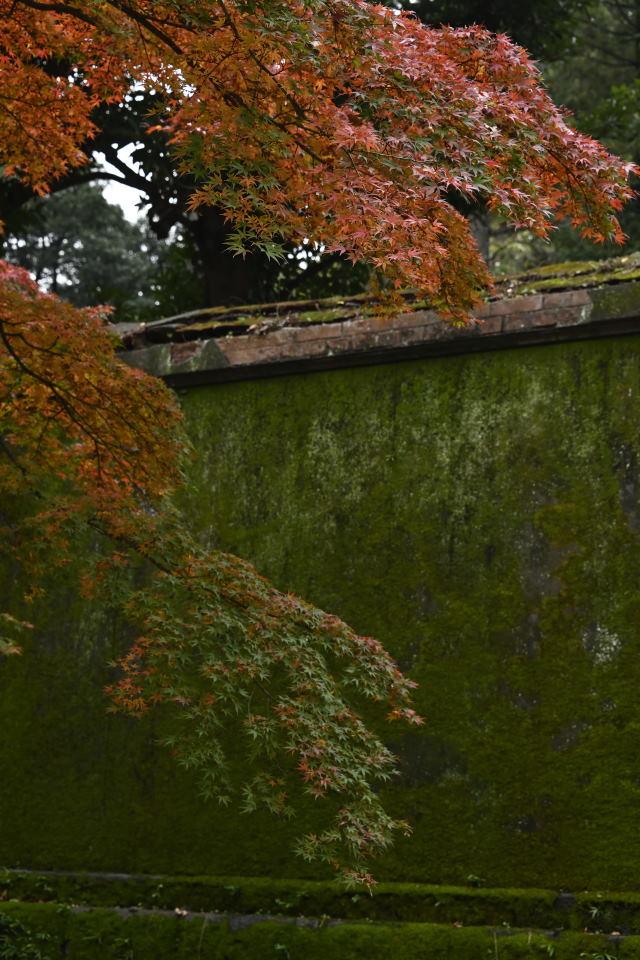 紅葉と苔生した塀