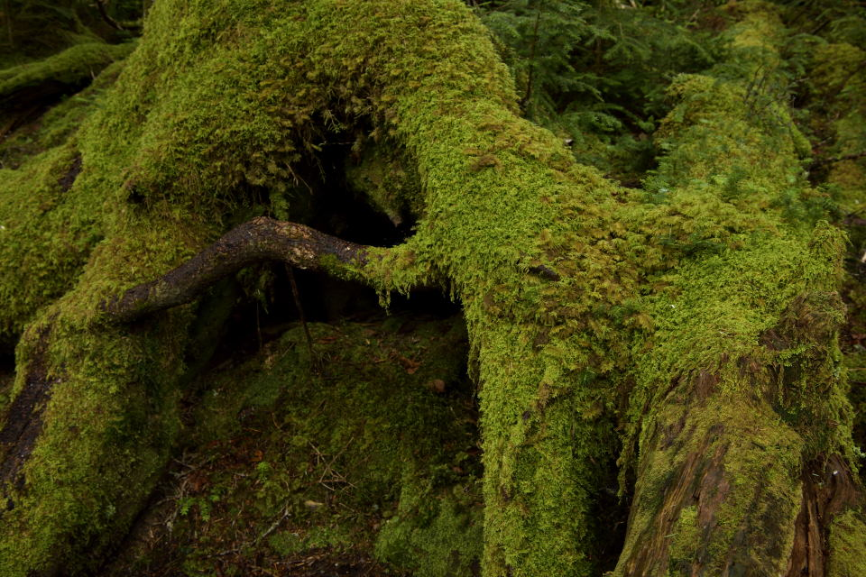 巨樹の根元