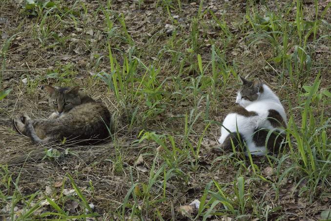 右の猫がボス