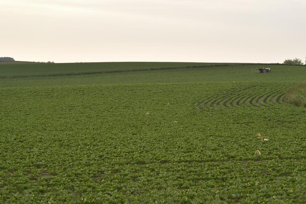 畑が広がる