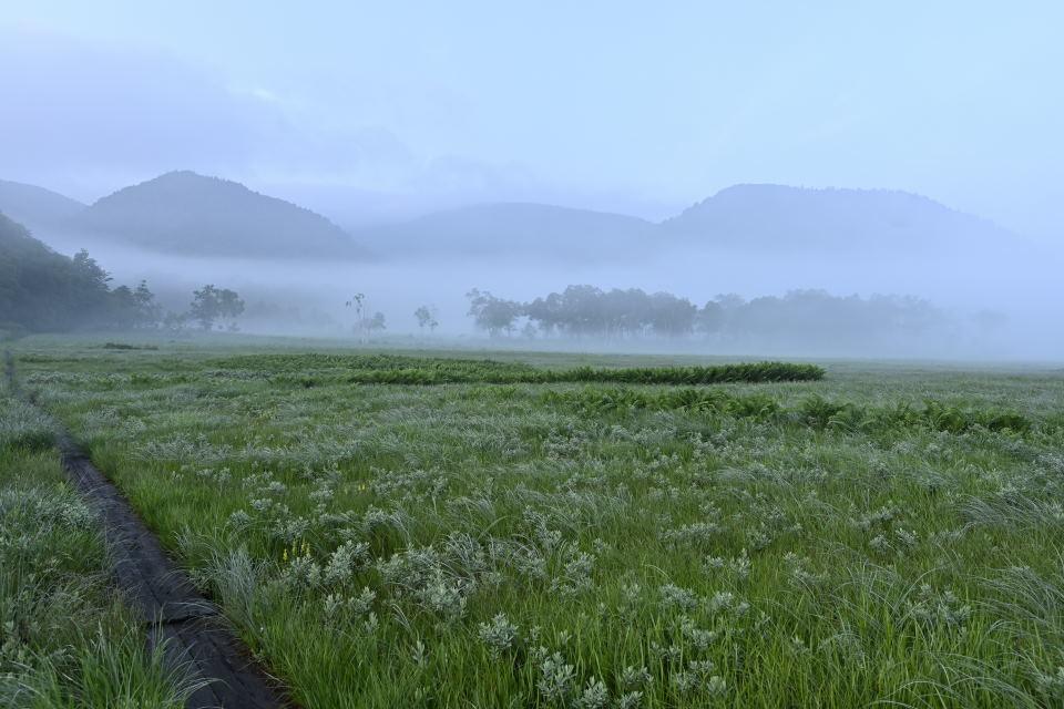 幻想的な湿原